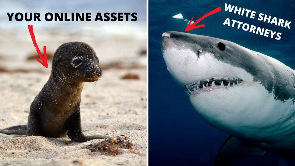 baby seal on beach and great white shark in the water
